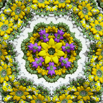 Fractal flowers bouquet by elminino