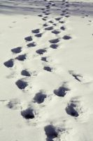 Foot prints in the snow by CarianneCouture