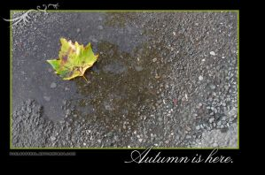 Autumn is here... by violetsteel