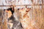 MG 0849-Edit by corniger-aries