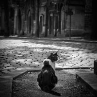 Chat du cimetiere 2 by Herculanum