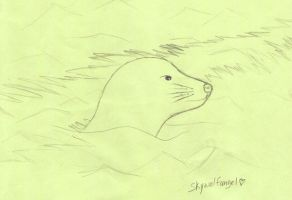 look a seal by skywolfangel