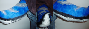 four tone blue nub tail by HVC333