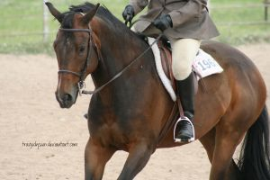 Quarter Horse Stock 74 by tragedyseen