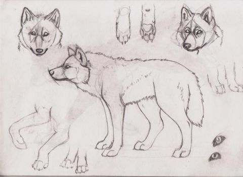 New Wolf Anatomy by Lost-Wolf-Soul