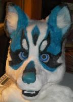 huskey fursuit head by keeatah
