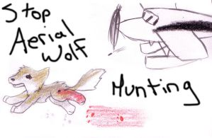 Hunting wolf wallpaper wallchan picture