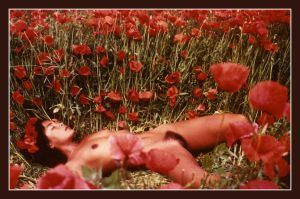 On the poppy field by faondejade