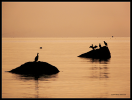 Silhouettes in  Golden Water by Mogrianne