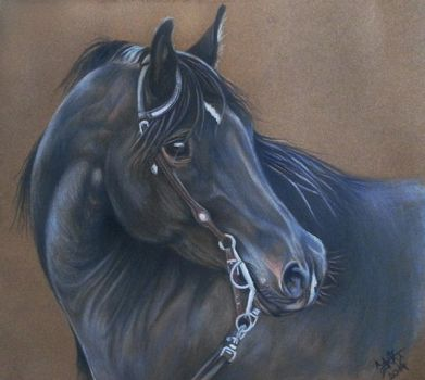 Black Arabian by Liaram