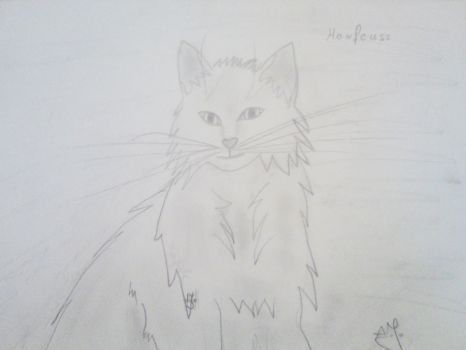 old draw of my cat by Darsse