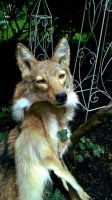 Coyote Headdress by AdarkerNEMISIS