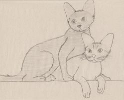 cats by Spinky1