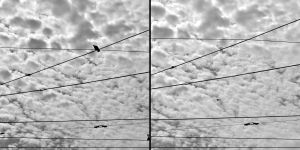 fragments of sky with a pidgeon by txay