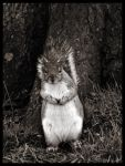 Squirrel Stand by Dreamk8