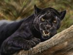 The big black cat. by Animal75Artist