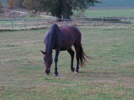 Horse 1 by Andenne