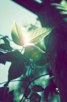 Light leaves by MultiMan