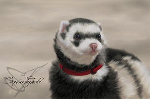 Ferret Commission by SquirrelyTodd