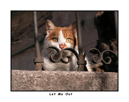 Let Me Out by evyto