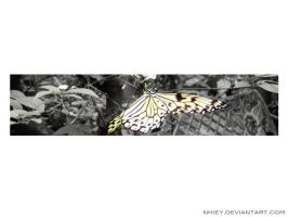 the butterFLY effect by nHieY