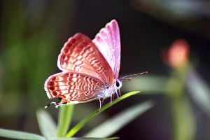 the alien butterfly by dnyphotography23