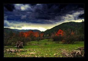 Woodland by mutos