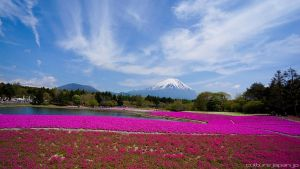 Mount Fuji by dannychoo