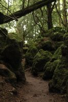 Puzzlewood 43 by Tasastock