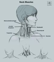 Neck Muscles DC6 by CatCouch