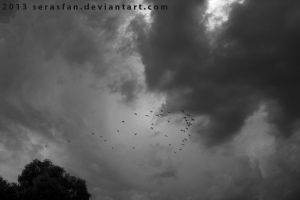 Storm Birds by serasfan