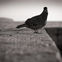 Curious by kpavlis
