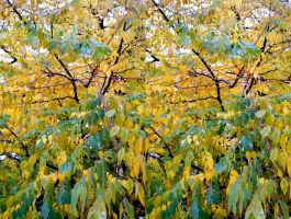 The Ash Tree Autumnal Foliage Stereo by aegiandyad