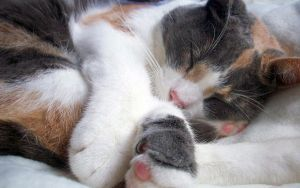 Sleeping Cat 2 by Becky125