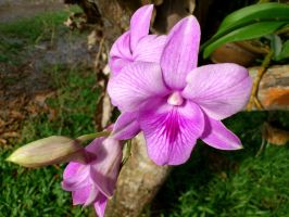 mom's orchids by plainordinary1