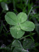 Lucky Charms by digitalTouch