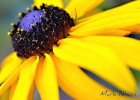 Yellow by Mark-Allison