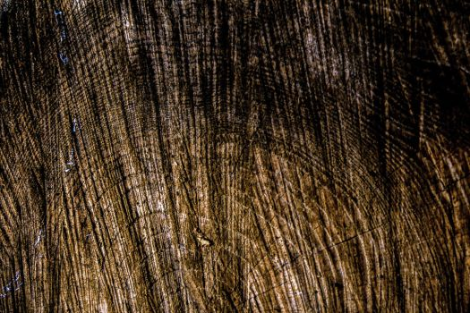 Wooden Texture III by Sugar-Sugar-Bee