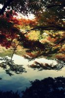 reflection in water by Shreever