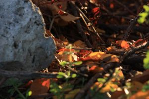 autumn 1 by Rheis