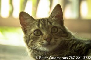 Cat with 28-85mm Vintage FD lens 2 by Caramanos2000