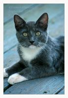 Edison by Goodbye-kitty975