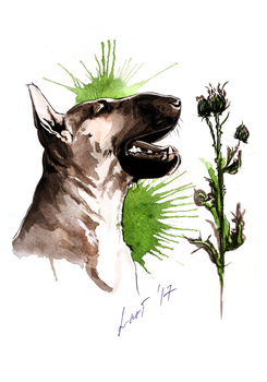 A Bullterrier with a Thistle by lariel-istime