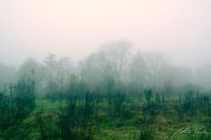 The Beauty Of Silence by NicPi