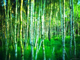 ....some more trees by Ego-Shooter