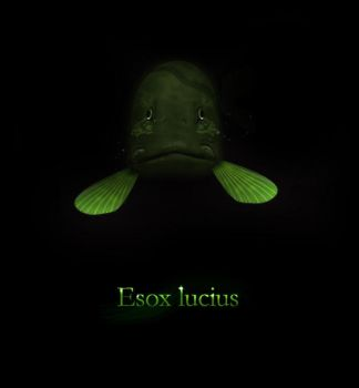 esox lucius by goalie41
