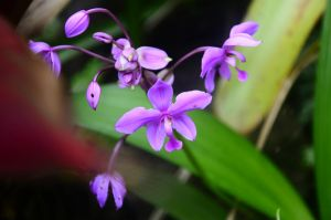 Purple Flower by UltraSonicUSA
