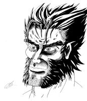 The Face of Wolverine by KingVego