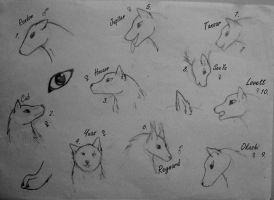 Canine Head sketches - developing my style by XcubX