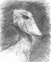 Shoebill by blacktsubu